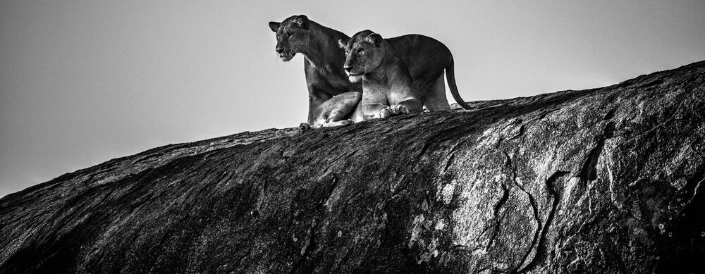 Photographie Somebody is coming, Tanzania 2015 - LAURENT BAHEUX - Tableau photo