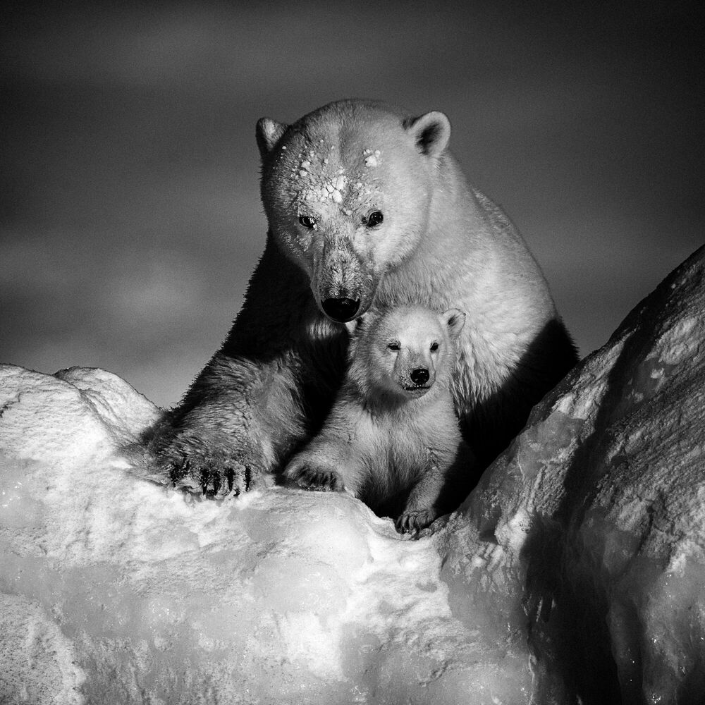 Photograph STRONGER TOGETHER - LAURENT BAHEUX - Picture painting