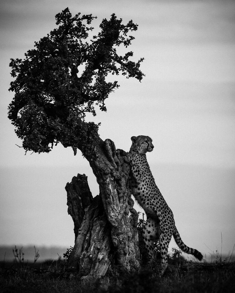 Fotografia VOIR PLUS LOIN - LAURENT BAHEUX - Pittura di immagini