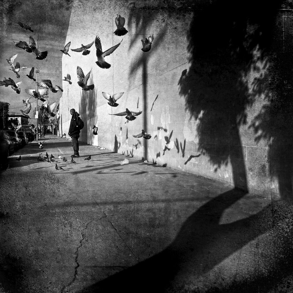 Fotografia PIGEONS & SHADOWS - LEE JEFFRIES - Pittura di immagini