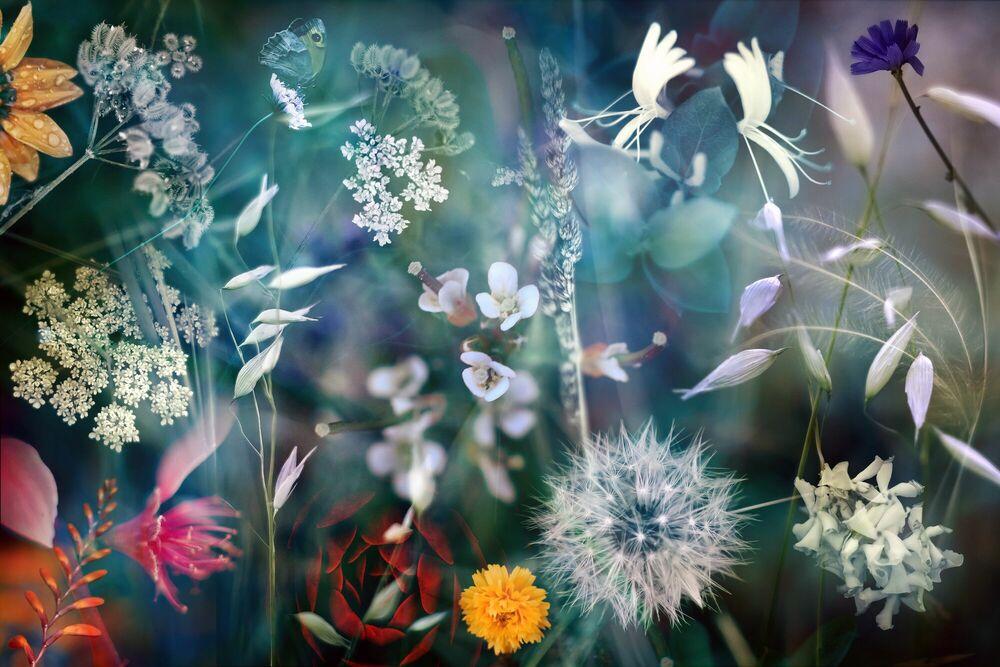 Fotografia Season I - LUIS MARIANO GONZALEZ - Pittura di immagini