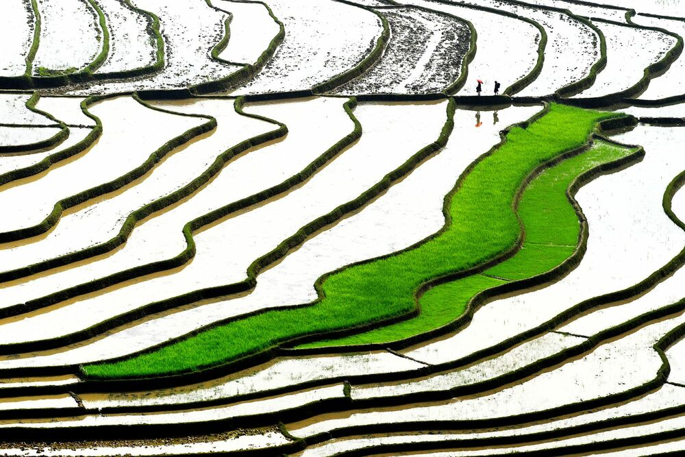 Photographie GREEN STEPS - LY HOANG  LONG - Tableau photo