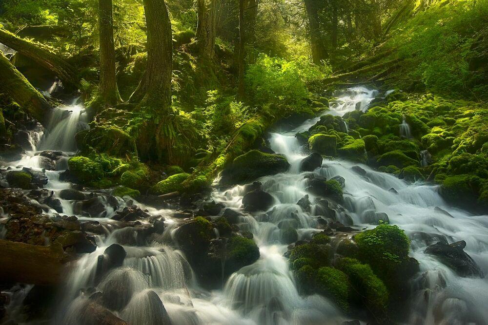 Fotografie Enchanted Forest Columbia Gorge Oregon - MARC ADAMUS - Bildermalerei
