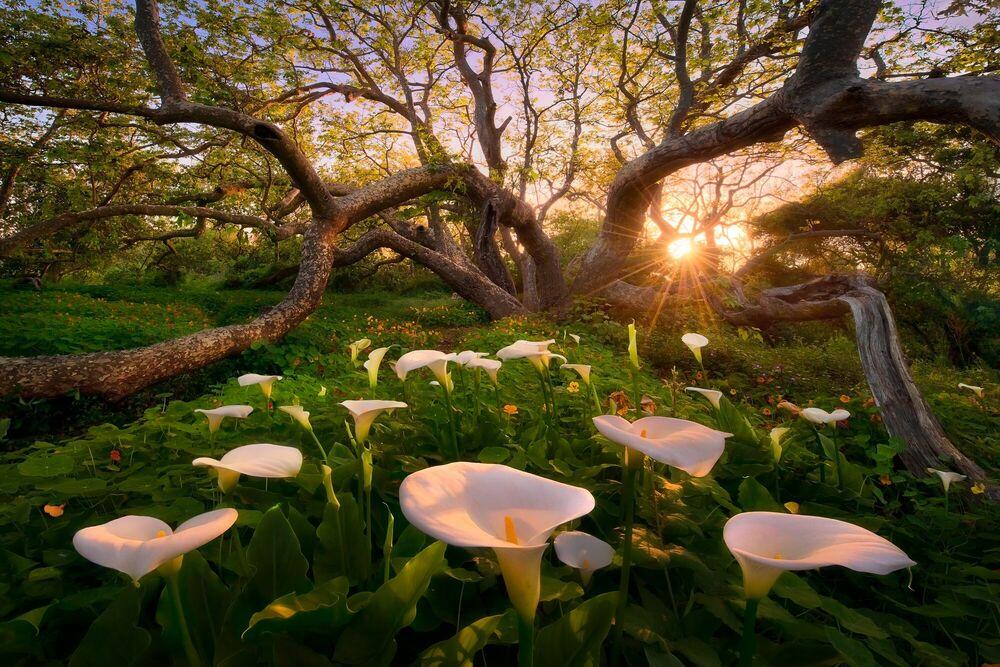 Fotografie Heaven on Earth California Coast Final - MARC ADAMUS - Bildermalerei