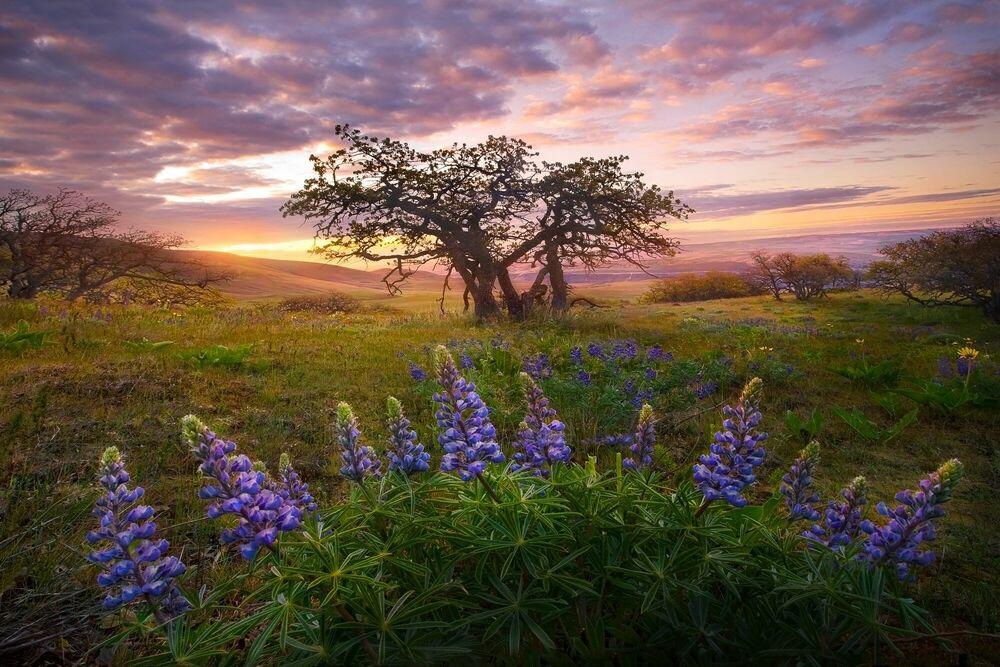 Fotografia MORNING MARVELS - MARC ADAMUS - Pittura di immagini