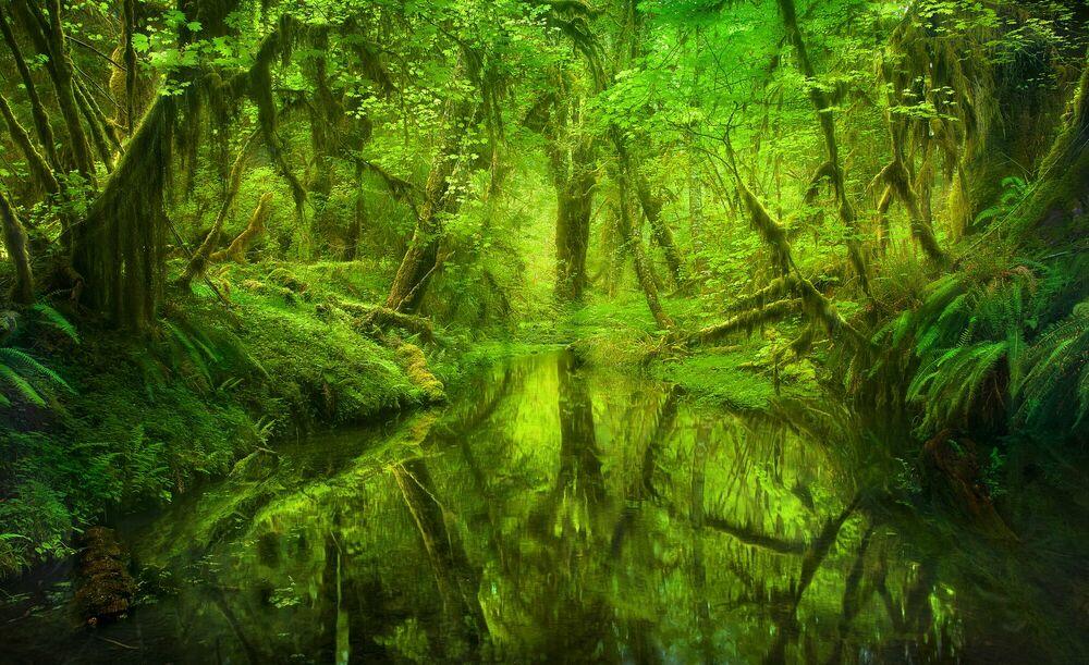 Photographie Paradise Forest Queets Rainforest Washington - MARC ADAMUS - Tableau photo