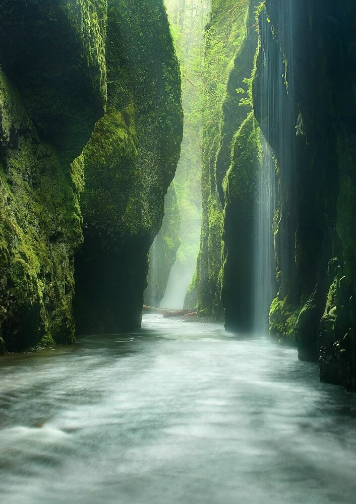 Photographie Rainforest Canyon Oneonta Gorge Oregon - MARC ADAMUS - Tableau photo