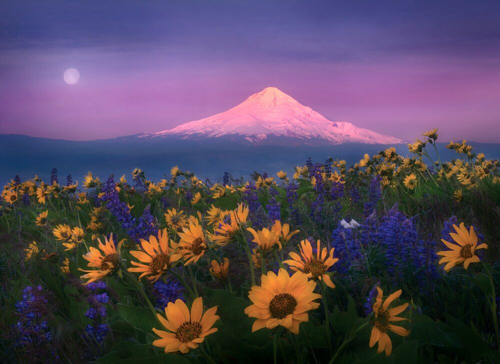 Photograph SHADES OF MORNING - MARC ADAMUS - Picture painting