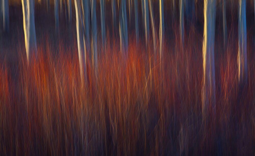 Photograph Wonderful Lost Boulder Mountain Aspens Utah - MARC ADAMUS - Picture painting
