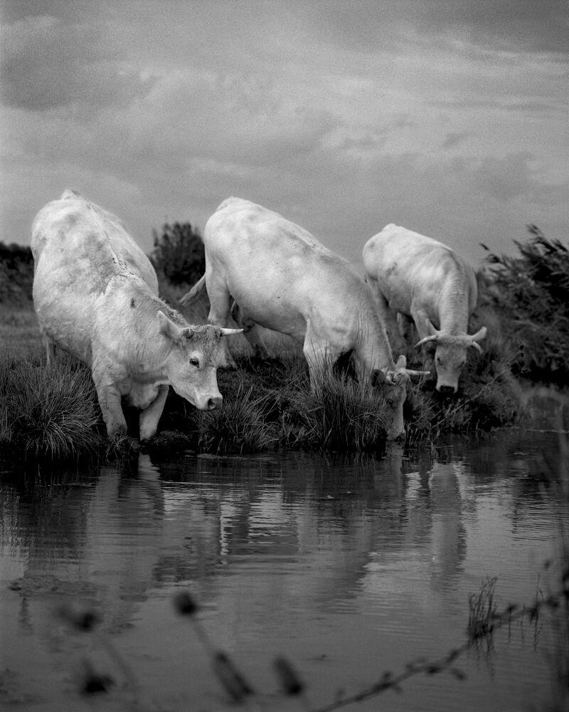 Fotografie WALKING THROUGH THE FIELD I - MARTIAL LENOIR - Bildermalerei
