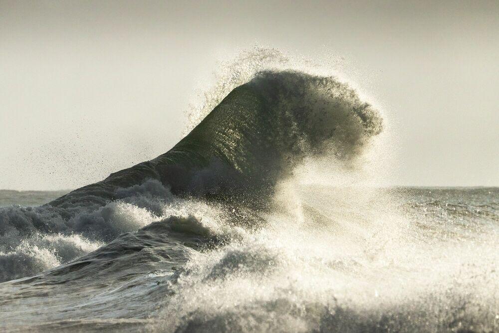 Fotografia LE TIGRE DE L OCEAN - MATHIEU RIVRIN - Pittura di immagini
