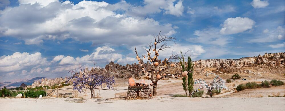 Fotografia Wishtree - MATTHIAS BARTH - Pittura di immagini