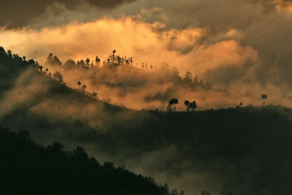 Photograph Les contreforts himalayens - MATTHIEU RICARD - Picture painting