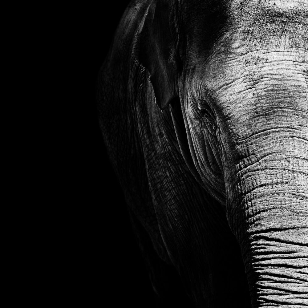 Fotografie Elephas Maximus - NICOLAS EVARISTE - Bildermalerei