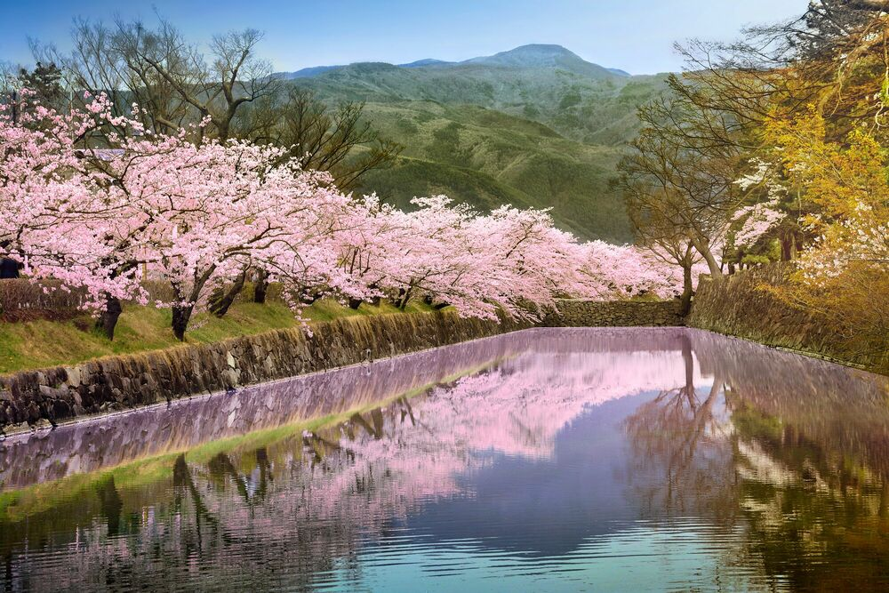 Fotografia Mirroring sakura - NICOLAS JACQUET - Pittura di immagini