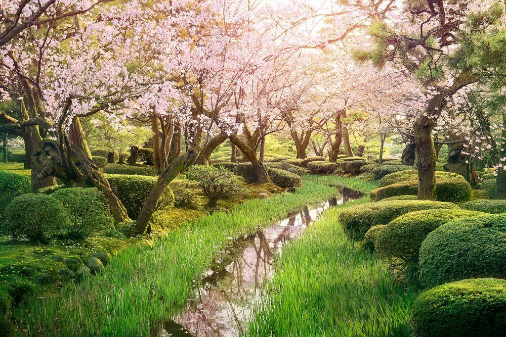 Fotografie Sakura stream - NICOLAS JACQUET - Bildermalerei