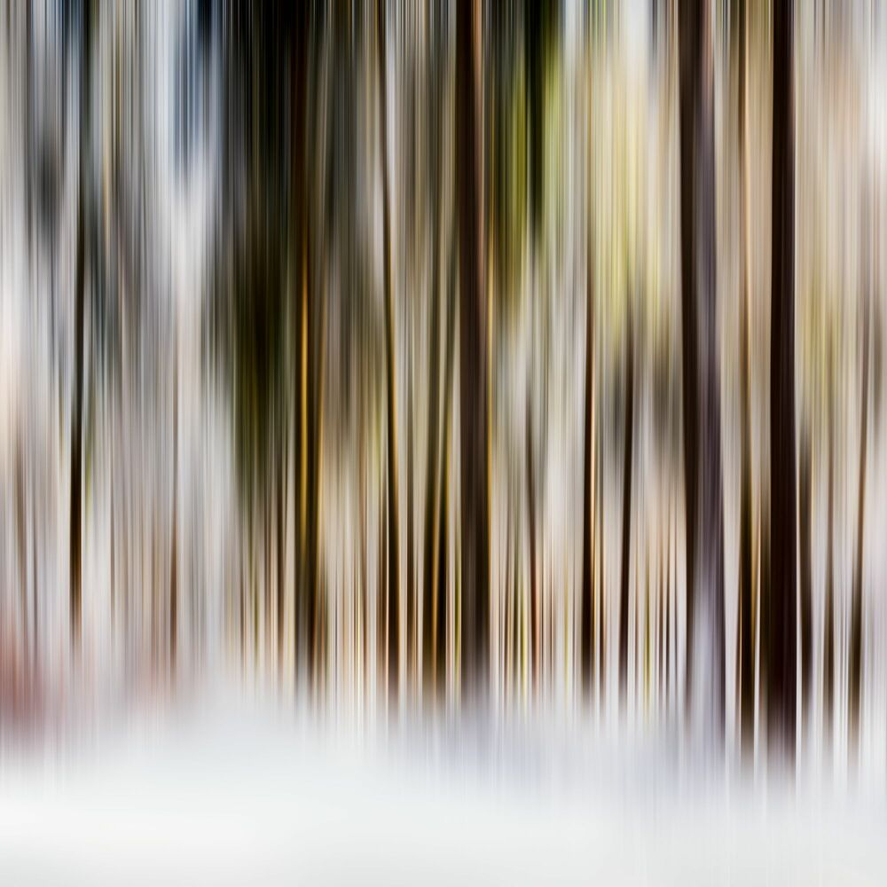 Photograph VERTICALE III - NICOLE HOLZ - Picture painting