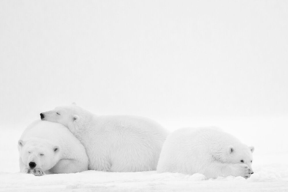 Fotografia SLEEPING FAMILY - NOLWENN HADET - Pittura di immagini