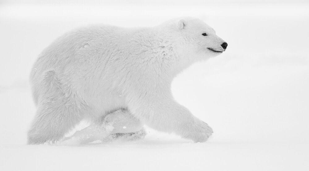 Photographie SMILING BEAR - NOLWENN HADET - Tableau photo