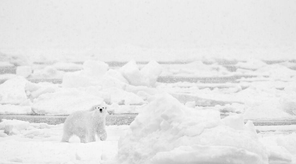Fotografie UNDER THE SNOW - NOLWENN HADET - Bildermalerei