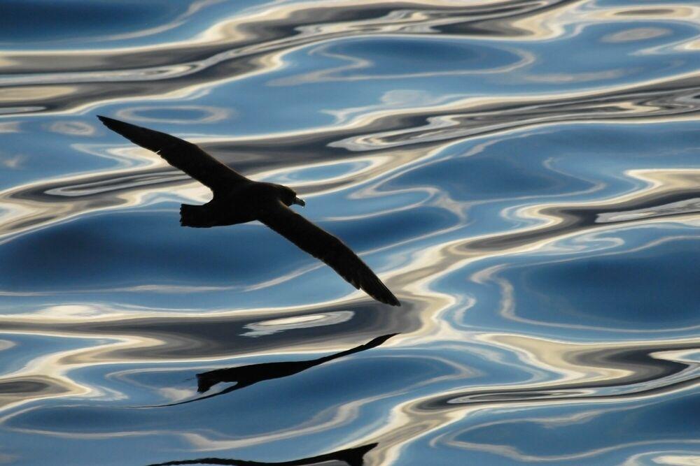 Fotografia REFLETS MELES - PAUL TIXIER - Pittura di immagini
