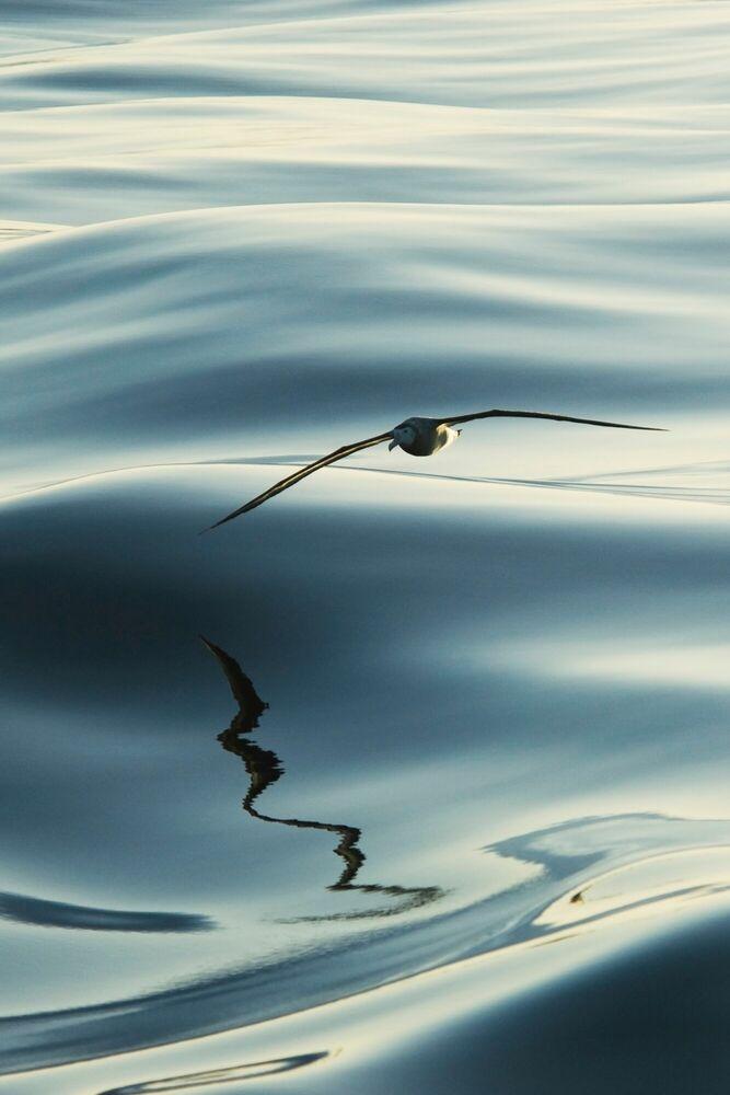 Photograph VAGABOND DES OCEANS - PAUL TIXIER - Picture painting