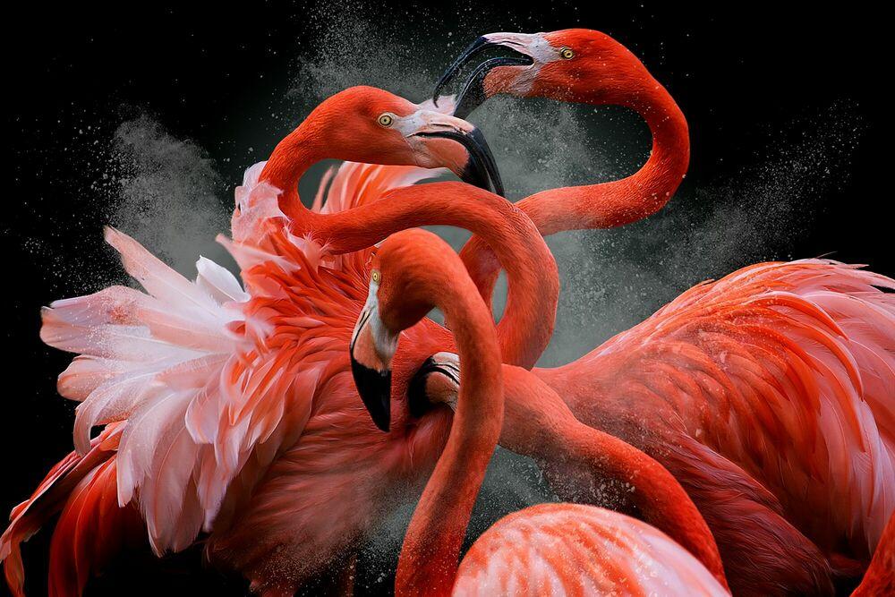 Fotografia BLACK FRIDAY - PEDRO JARQUE KREBS - Pittura di immagini