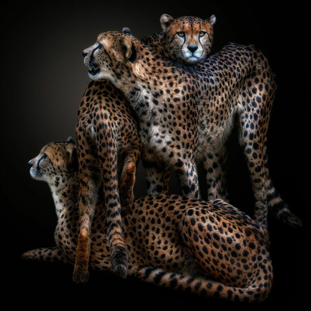 Fotografie LAWLESS GANG - PEDRO JARQUE KREBS - Bildermalerei