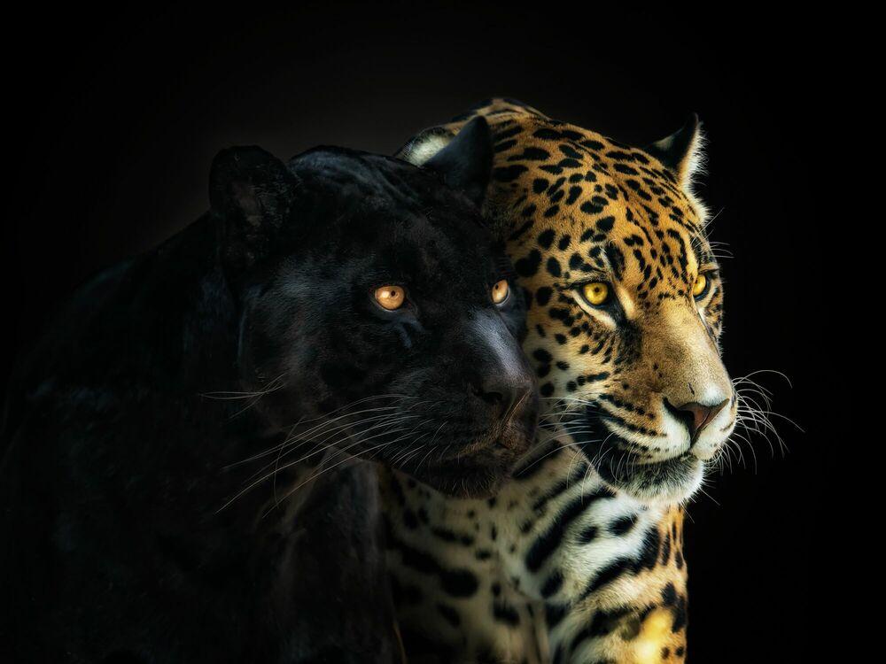 Fotografia PERFECT HARMONY - PEDRO JARQUE KREBS - Pittura di immagini