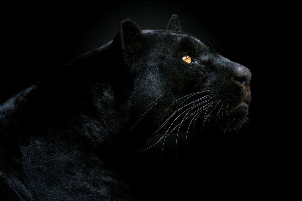 Fotografia SON OF THE NIGHT - PEDRO JARQUE KREBS - Pittura di immagini