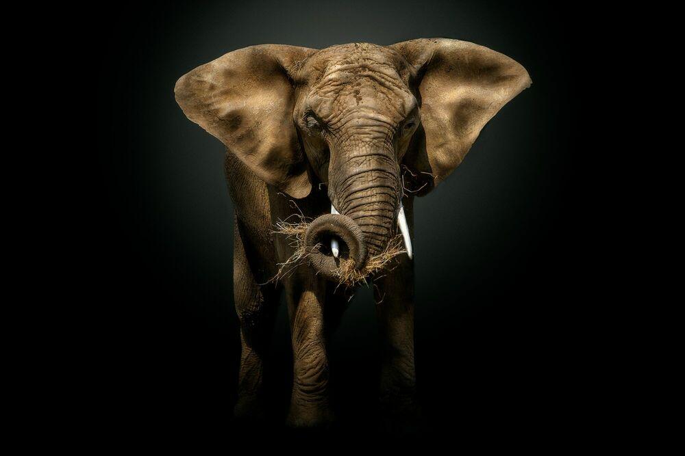 Fotografia THE MASTER - PEDRO JARQUE KREBS - Pittura di immagini