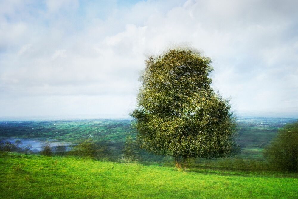 Photograph LANDSCAPE AND TREE II - PETER MADSEN - Picture painting