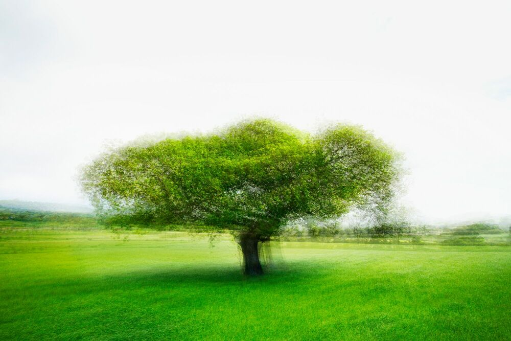 Photographie LANDSCAPE AND TREE IV - PETER MADSEN - Tableau photo