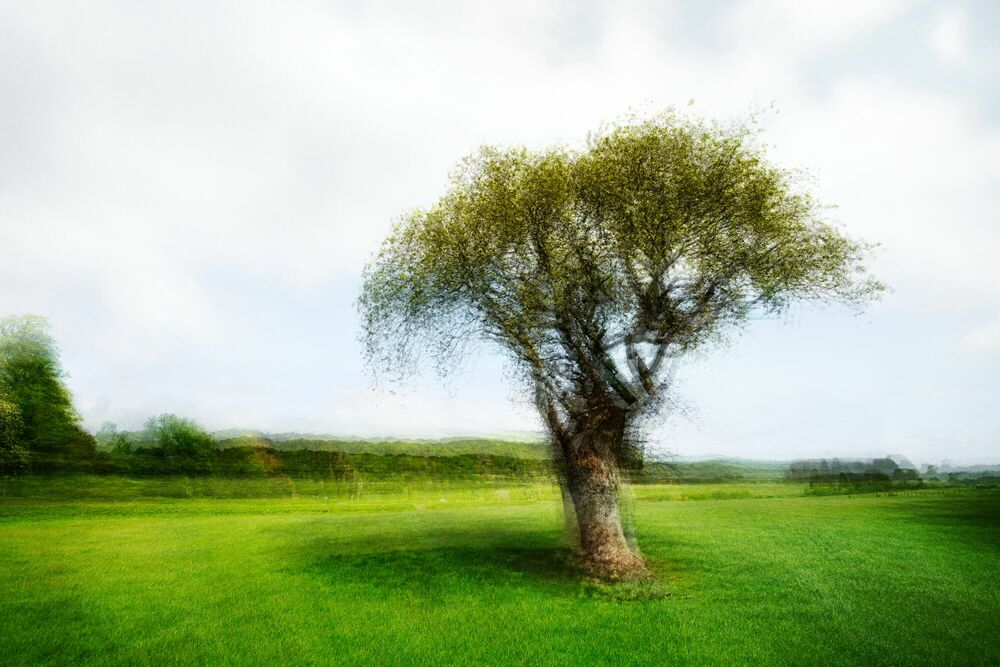 Photographie LANDSCAPE AND TREE V - PETER MADSEN - Tableau photo