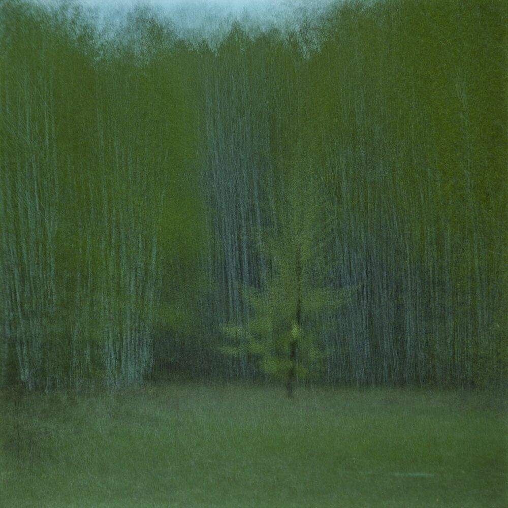 Photograph LONELY TREE - PETRO POHODIN - Picture painting