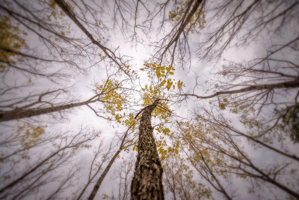 Fotografie Trees in countryside - PYGMALION KARATZAS - Bildermalerei