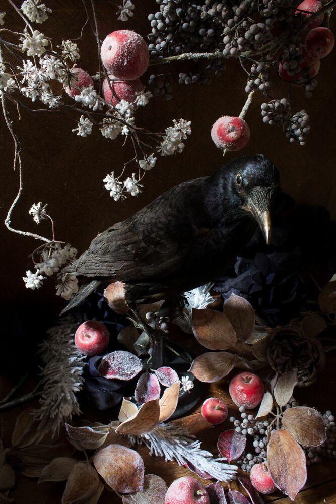 Fotografia CORBEAU D IMBOLC - RENARDS GOURMETS - Pittura di immagini