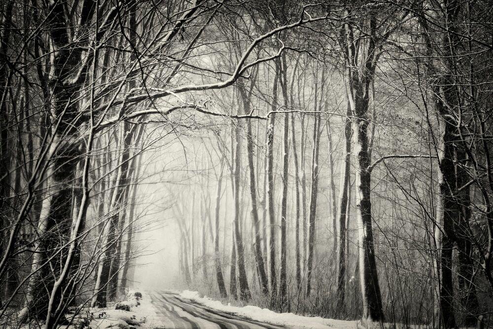 Fotografie Forest in snow - Robert Peek - Bildermalerei