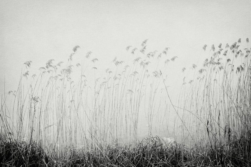 Photographie Reeds in foggy landscape - Robert Peek - Tableau photo