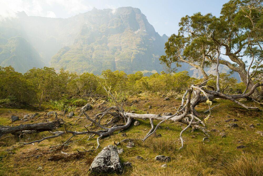 Fotografie Plaine des Tamarins I Cirque de Mafate Île de la Réunion - RODIGER VOGEL - Bildermalerei