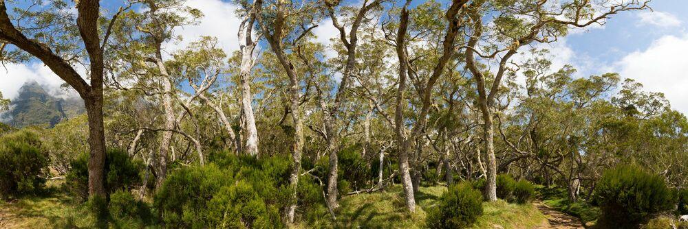 Photographie Plaine des Tamarins II Cirque de Mafate Île de la Réunion - RODIGER VOGEL - Tableau photo