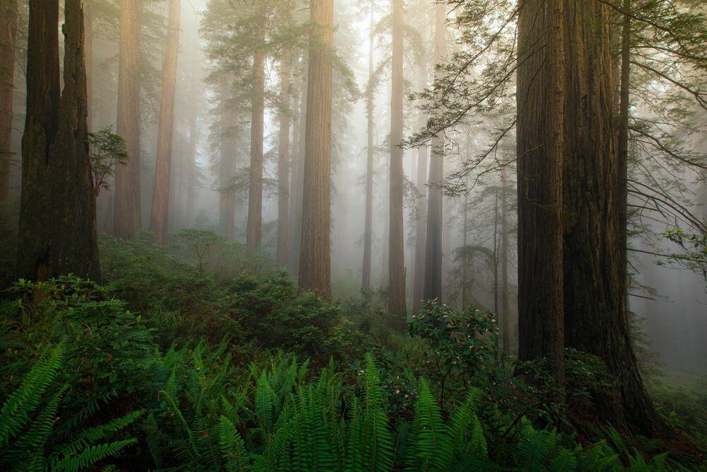 Fotografie MYSTIC FOREST - SAPNA REDDY - Bildermalerei