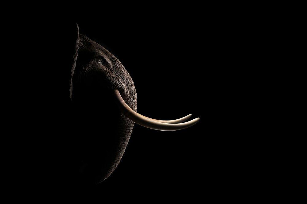 Photographie AFRICAN ELEPHANT -  SAREL AND MARYNA - Tableau photo
