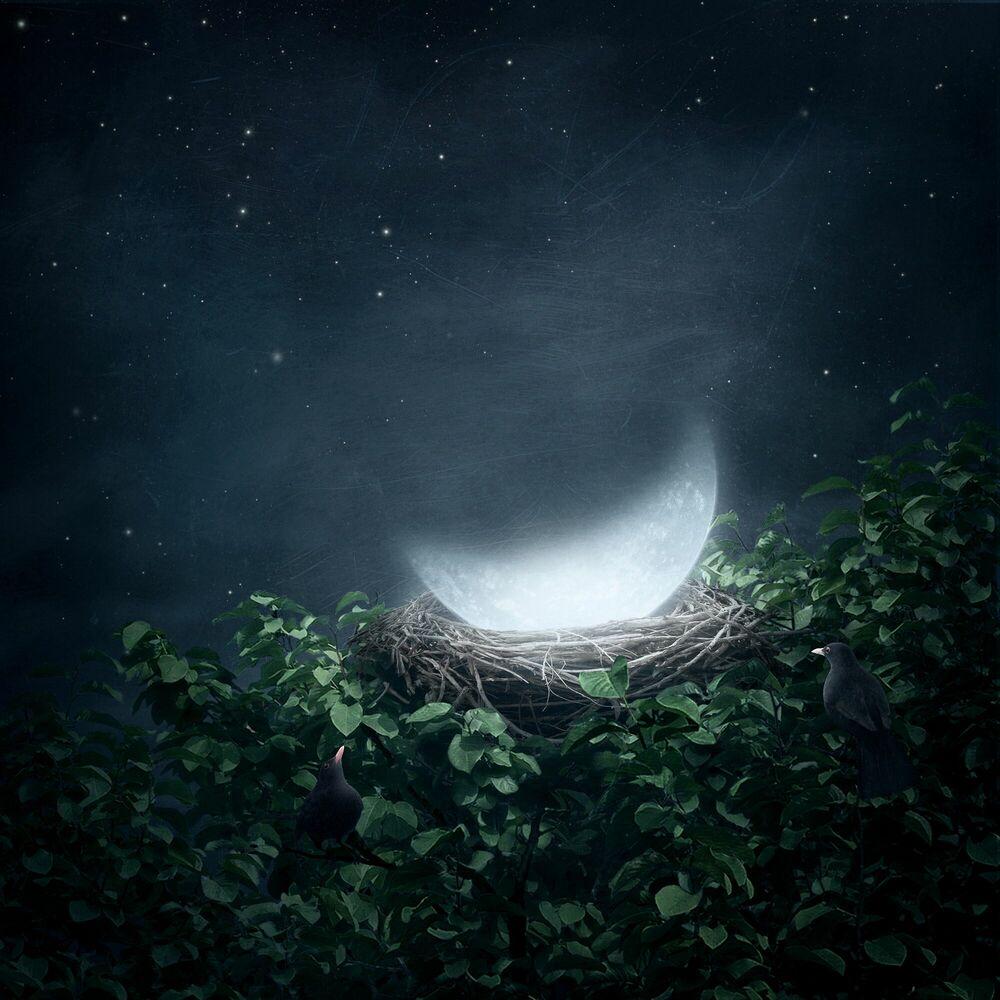 Fotografie Our Nest -  SAROLTA BAN - Bildermalerei