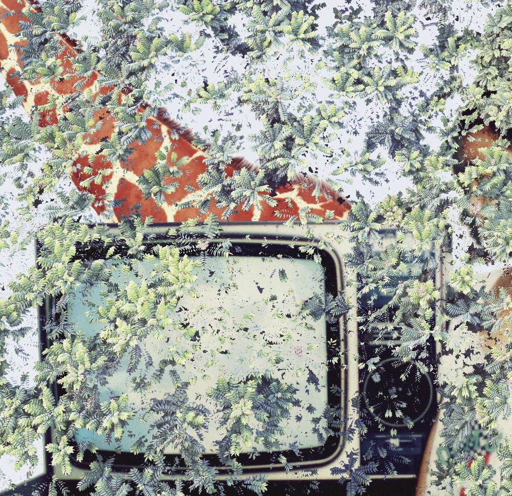 Photograph Wild Dream and Spark - SHAN KUN WU - Picture painting