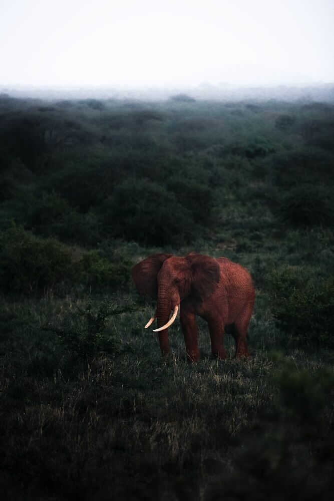 Fotografie RED GIANT - STIAN KLO - Bildermalerei
