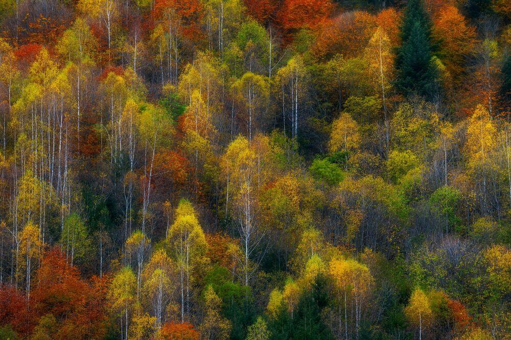 Fotografie AUTUMN TISSUE - SZABO ZSOLT ANDRAS - Bildermalerei