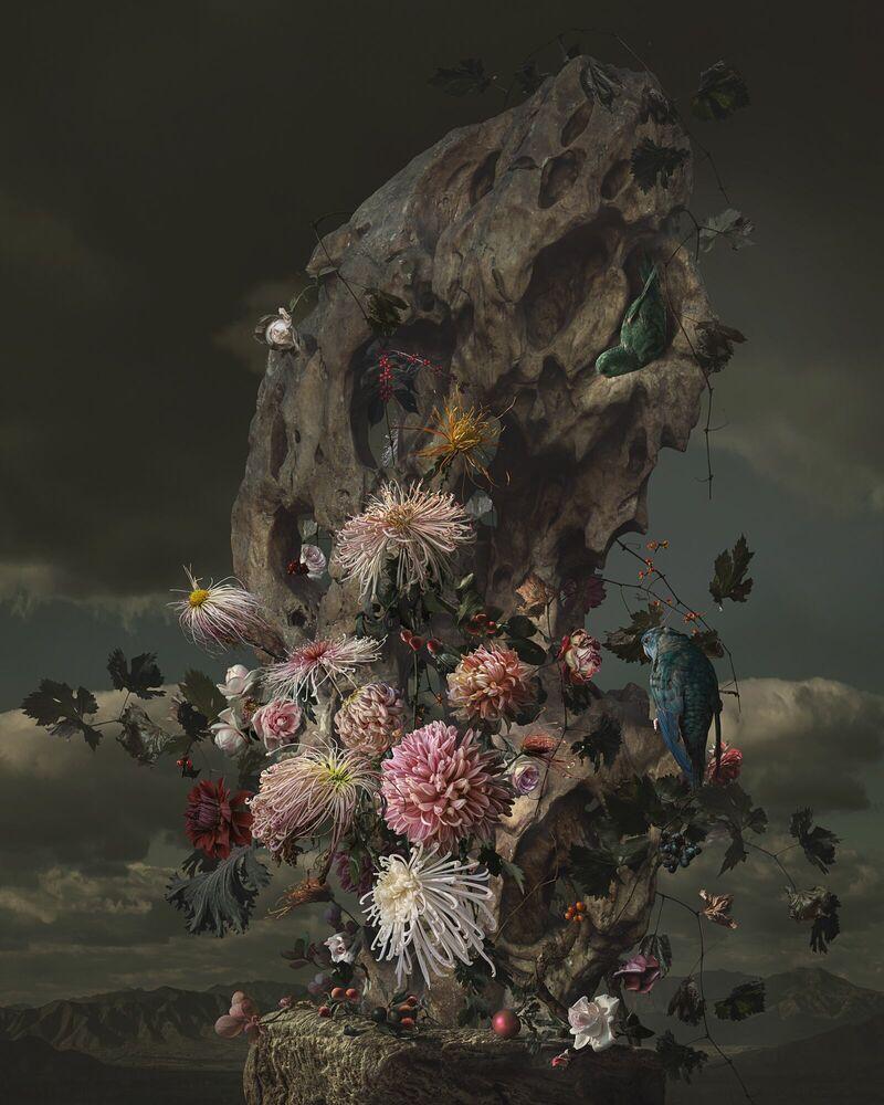 Fotografie ROCKERY AND PARROT - YANG BIN - Bildermalerei