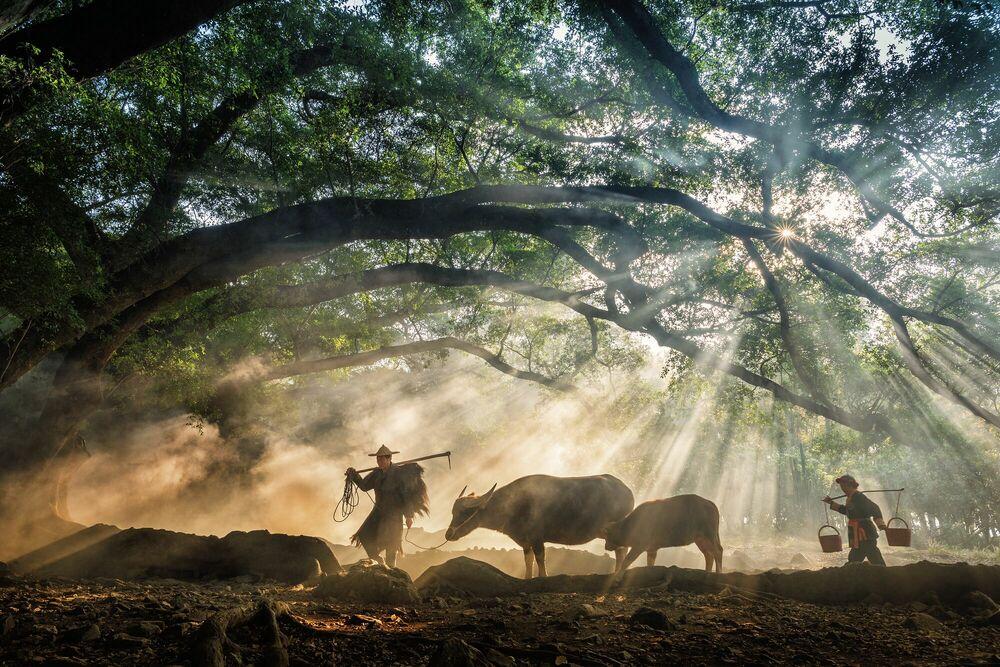 Fotografia Going To The Farm - Zay Yar Lin - Pittura di immagini