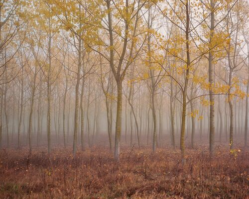 Planted Forest - AKOS MAJOR - Photograph